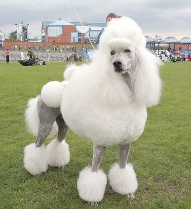 perros-raza