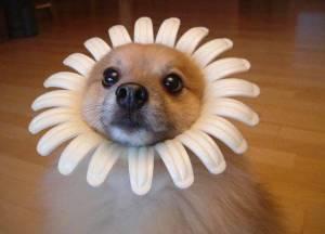 Flor de perro